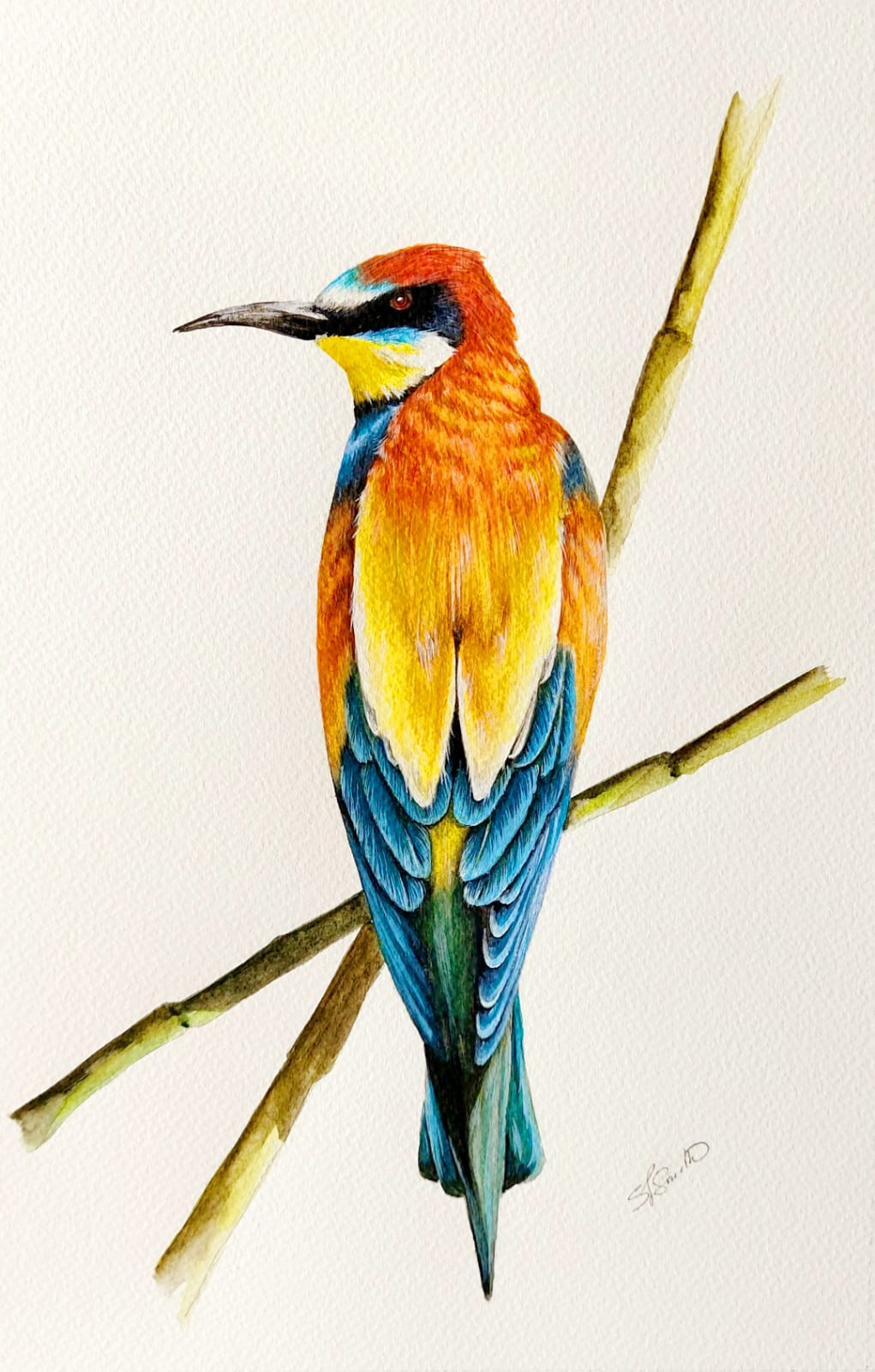Flora and Fauna Bee Eater